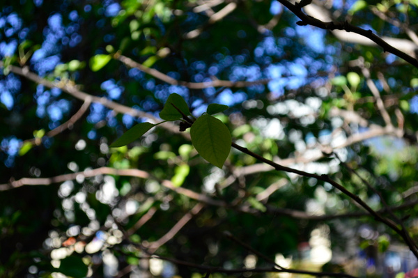 leafs by JosephMartinez