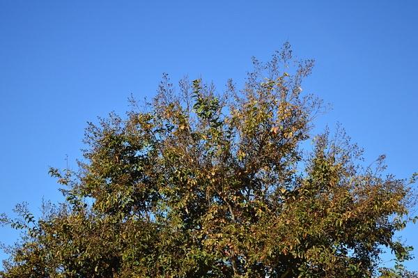Sky tree by JosephMartinez