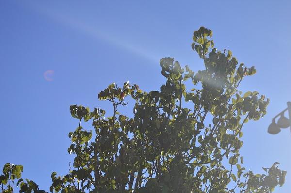 Sunny tree by JosephMartinez