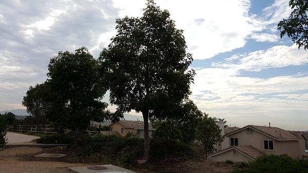 Big tree by JosephMartinez
