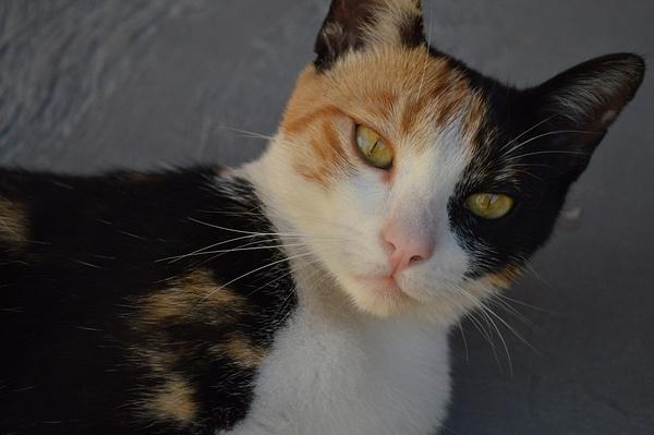 Cat by AndresRuvalcaba
