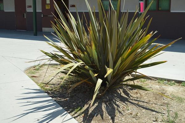 Plant by AndresRuvalcaba