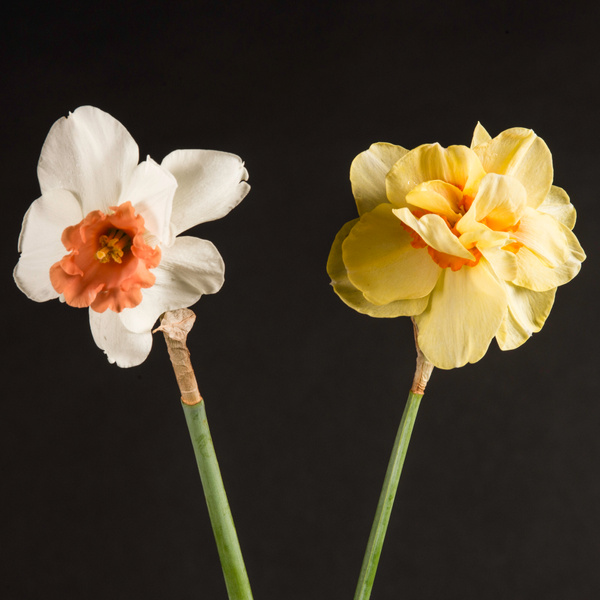 Flowers by FredHom