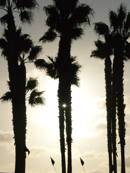 Palm Treez by EstebanAguilar