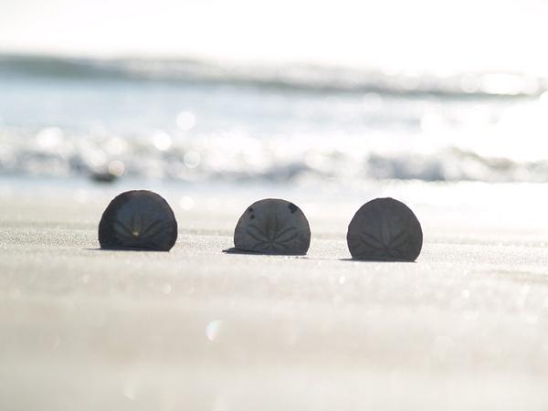 Sand Dollars by EstebanAguilar