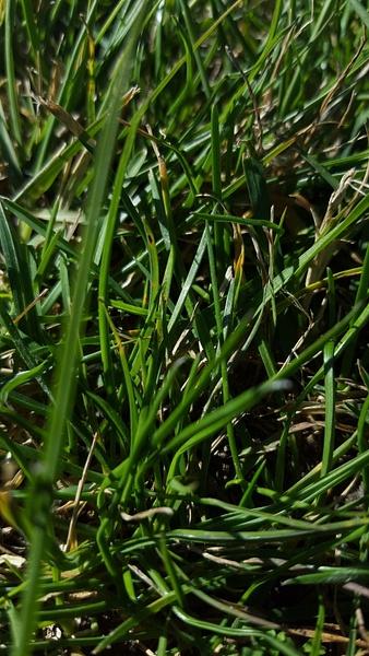 grass by EstebanAguilar