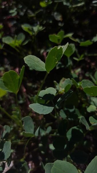 leaves by EstebanAguilar