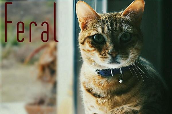 feral by EstebanAguilar