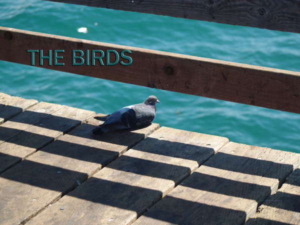 the birds by EstebanAguilar