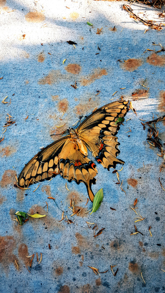 butterfly butterdie by EstebanAguilar