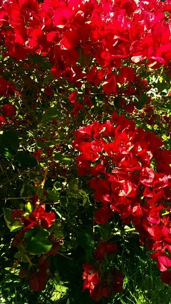 FLOWERS by EstebanAguilar