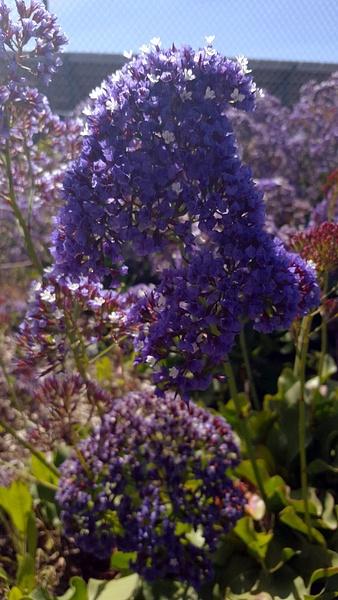 FLOWERSSS by EstebanAguilar