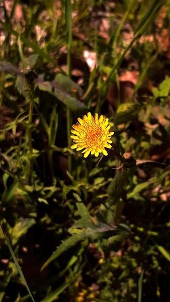 lonely flower by EstebanAguilar