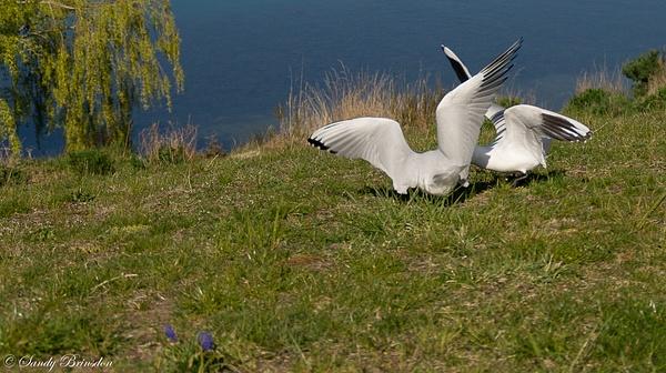 Seagulls by SandyBrinsdon