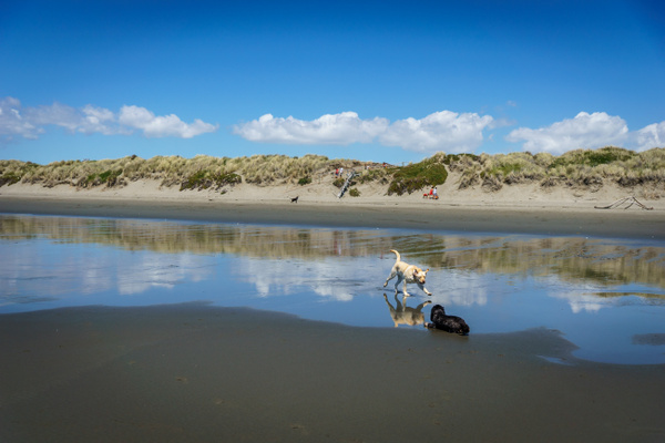 Waimari Beach by SandyBrinsdon