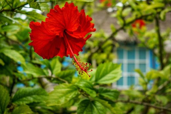 flower by SandyBrinsdon