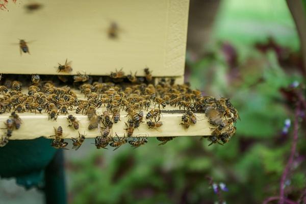 bees in the garden by SandyBrinsdon