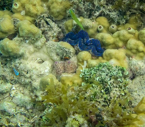 underwater by SandyBrinsdon