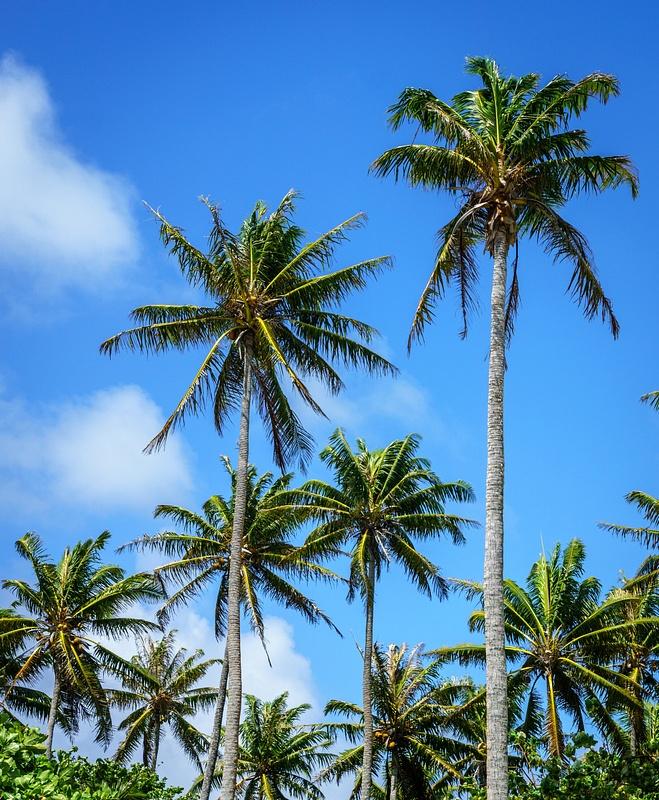 Palms Huahine