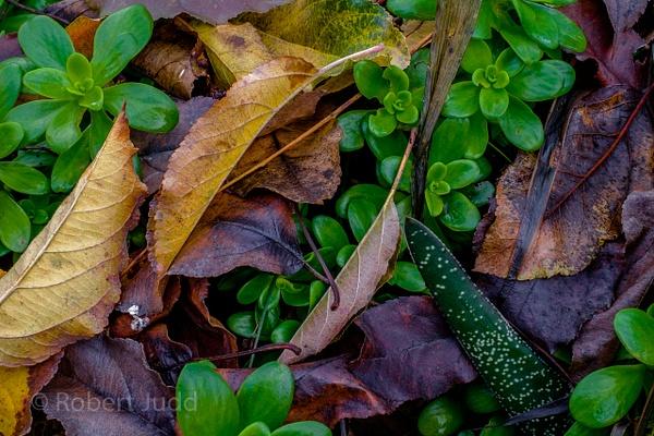 Nature by Artyjay