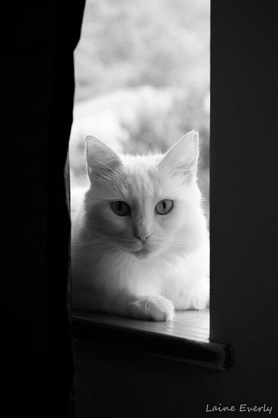 Window gazer by Elaine Everly
