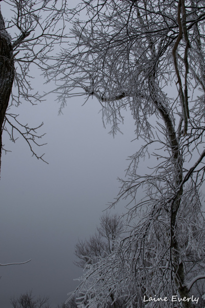 frosted trees by Elaine Everly