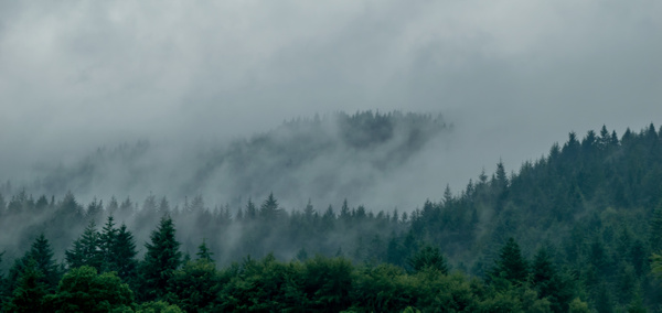 Forests of Scotland by Elaine Everly