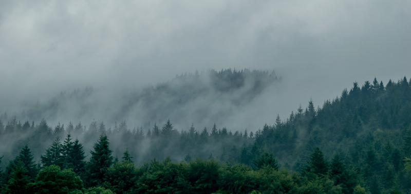 Forests of Scotland