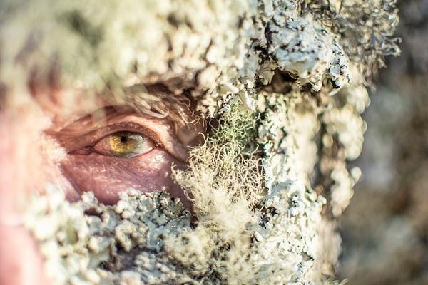 Lichen by Elaine Everly