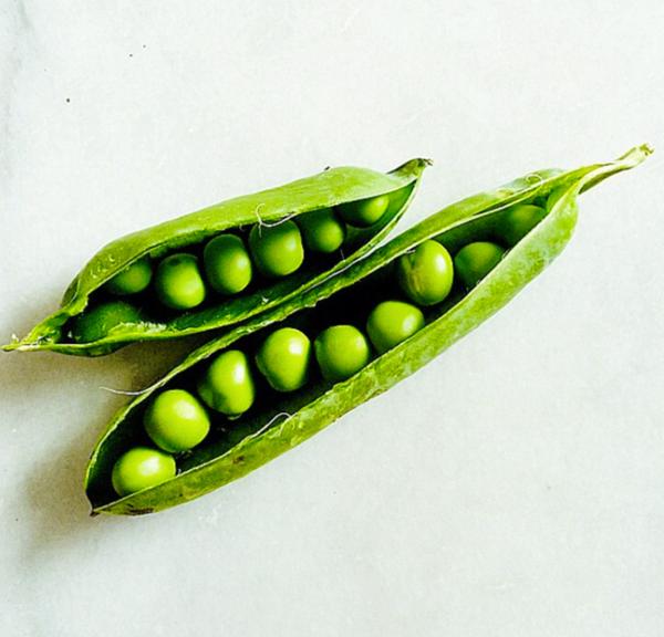 peas in a pot by Gabriel le Roux