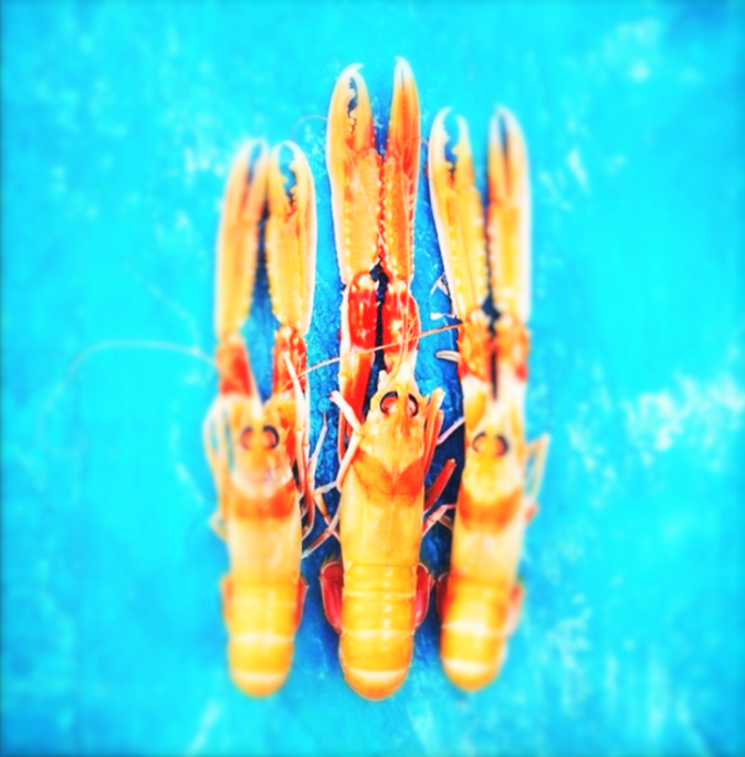 poached langoustines