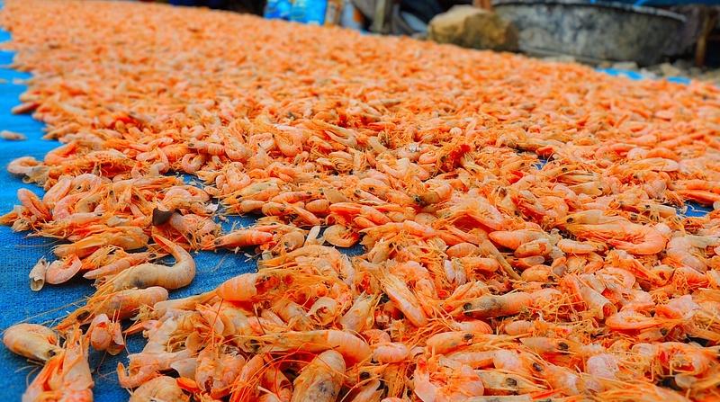 drying shrimps