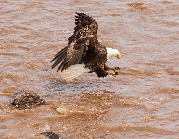 eagle 033 by Colt45cal
