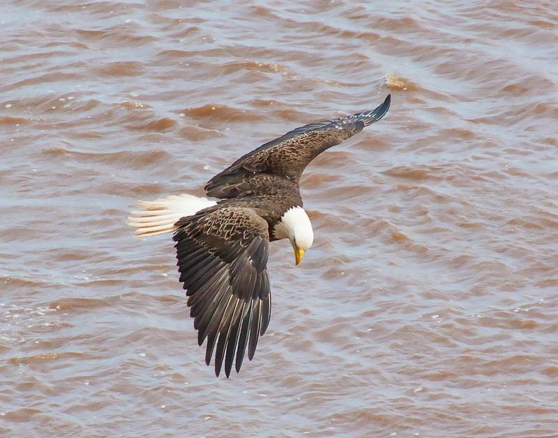 eagle 035