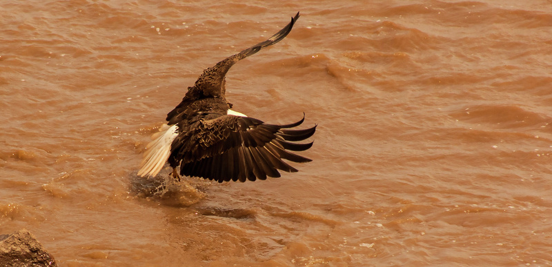 eagle 065