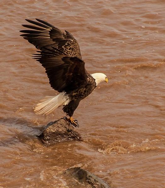 eagle 069 by Colt45cal
