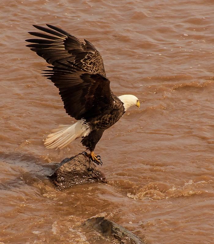 eagle 069