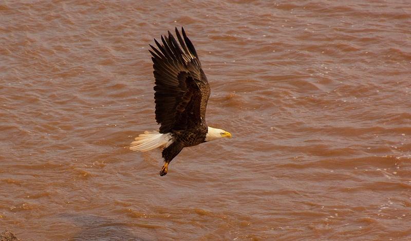eagle 072