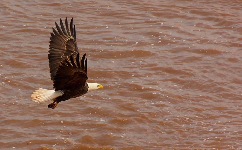 eagle 074