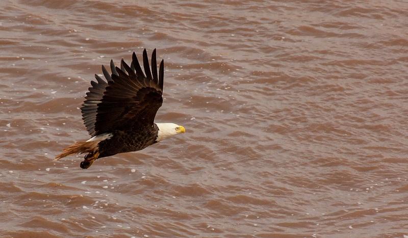 eagle 075