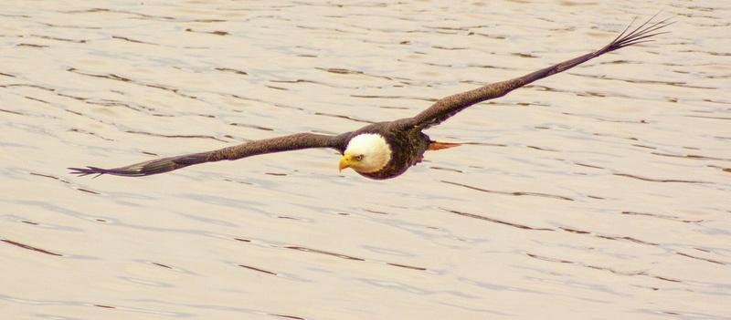 eagle may14 017