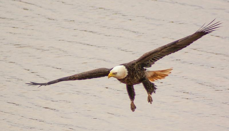 eagle may14 018
