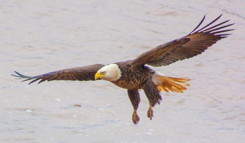 eagle may14 019