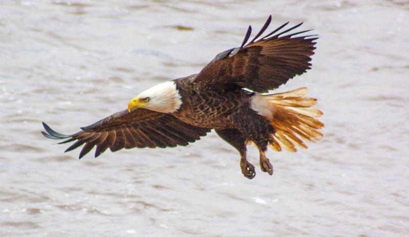 eagle may14 021