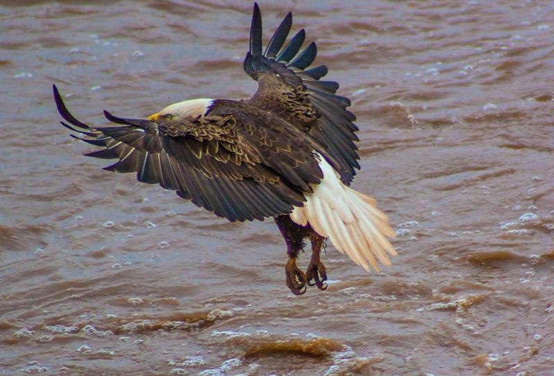 eagle may14 022