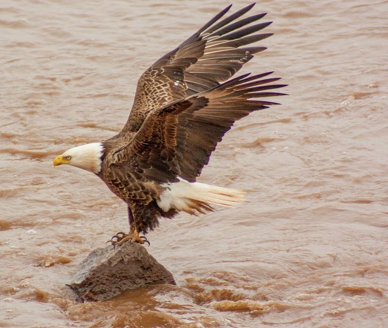 eagle may14 024