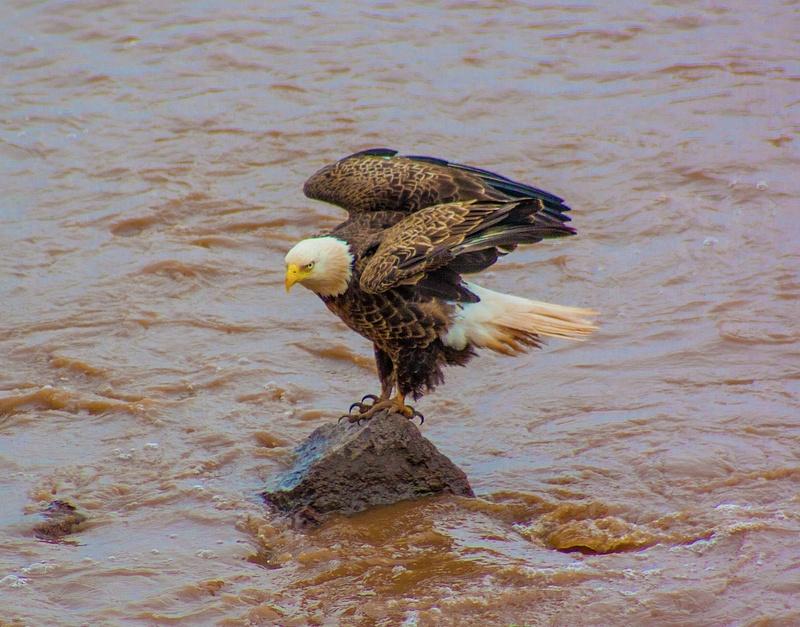 eagle may14 025