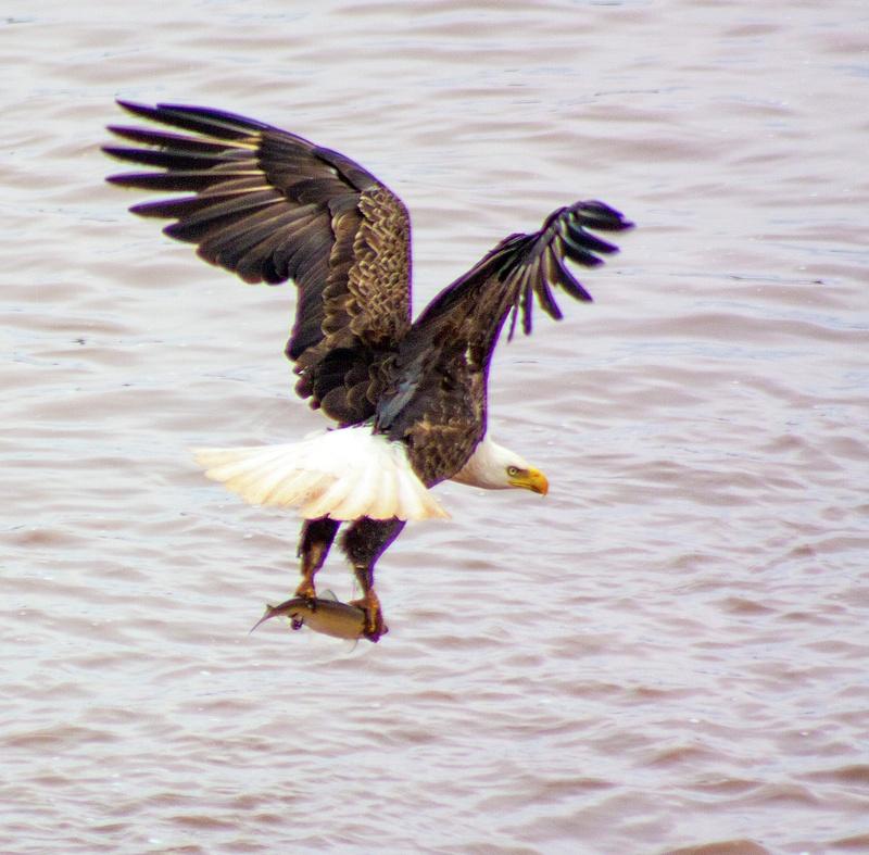 eagle may14 031