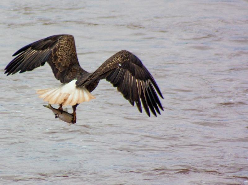 eagle may14 034
