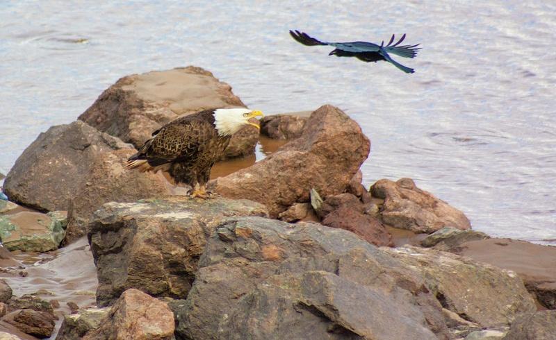 eagle may14 044